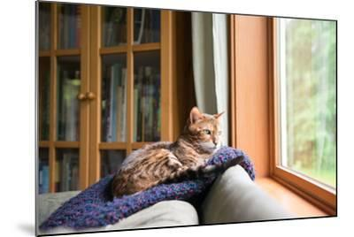 Bengal Mix Cat Relaxing on Indigo Blue Blanket by Large Window Looking Outside-Anna Hoychuk-Mounted Photographic Print