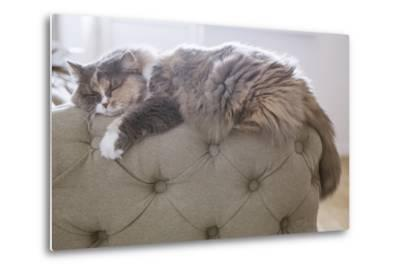 Cat Sleeping on the Couch- Gipsy-Metal Print