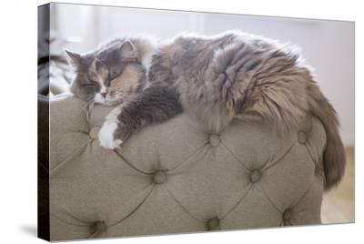 Cat Sleeping on the Couch- Gipsy-Stretched Canvas Print
