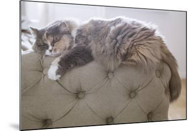 Cat Sleeping on the Couch- Gipsy-Mounted Photographic Print