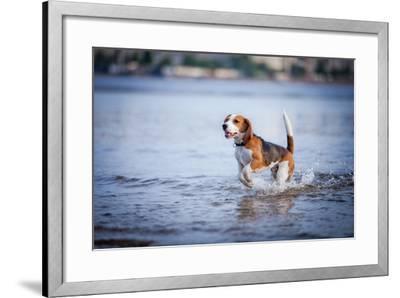The Dog in the Water, Swim, Splash- dezi-Framed Photographic Print