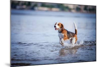 The Dog in the Water, Swim, Splash- dezi-Mounted Photographic Print
