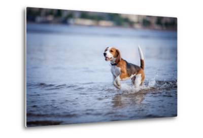 The Dog in the Water, Swim, Splash- dezi-Metal Print