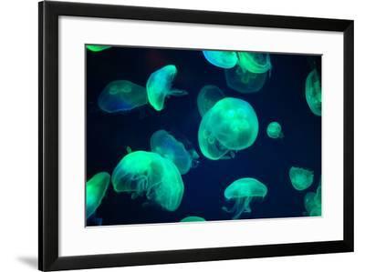 Jellyfish- Chizara3-Framed Photographic Print