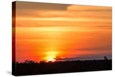 Gorgeous African Sunset in Kruger National Park-Stephen Lew-Stretched Canvas Print