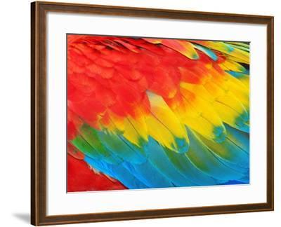 Parrot Feathers, Red and Blue Exotic Texture- Edelwipix-Framed Photographic Print