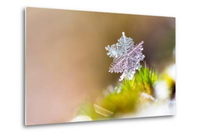 Beautiful close up Image of a Snowflake on the Ground in Nature-Dennis van de Water-Metal Print