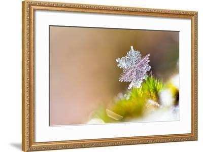Beautiful close up Image of a Snowflake on the Ground in Nature-Dennis van de Water-Framed Photographic Print