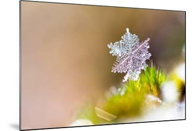 Beautiful close up Image of a Snowflake on the Ground in Nature-Dennis van de Water-Mounted Photographic Print