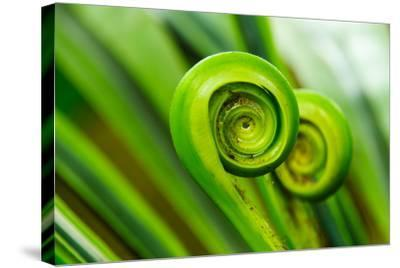 The Green Fern Origin to in the Nature-c photospirit-Stretched Canvas Print