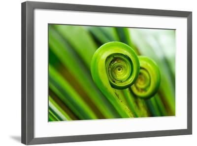 The Green Fern Origin to in the Nature-c photospirit-Framed Photographic Print