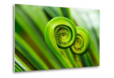 The Green Fern Origin to in the Nature-c photospirit-Metal Print