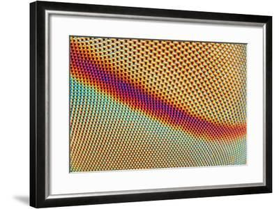 An Extreme Sharp and Detailed Microscopic close up of the Compound Eye of a Horse Fly Taken with Mi- Tomatito-Framed Photographic Print