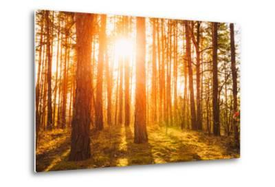 Sunset Sunrise in Atumn Coniferous Forest Trees. Nature Woods. HDR-Grisha Bruev-Metal Print