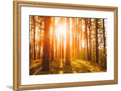 Sunset Sunrise in Atumn Coniferous Forest Trees. Nature Woods. HDR-Grisha Bruev-Framed Photographic Print