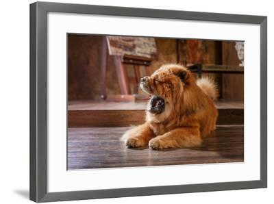 Dog Breed Chow Chow, Red Dog on a Retro Vintage Studio Background- dezi-Framed Photographic Print