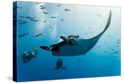 Manta and Diver on the Blue Background-Krzysztof Odziomek-Stretched Canvas Print