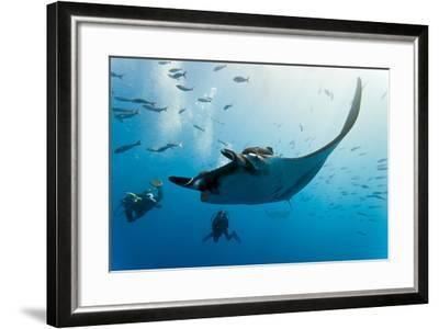 Manta and Diver on the Blue Background-Krzysztof Odziomek-Framed Photographic Print
