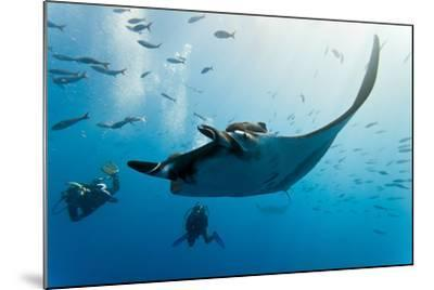 Manta and Diver on the Blue Background-Krzysztof Odziomek-Mounted Photographic Print