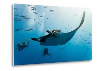 Manta and Diver on the Blue Background-Krzysztof Odziomek-Metal Print
