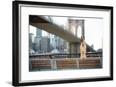 Dog Standing in Front of Brooklyn Bridge and NYC Skyline Horizontal-The Dog Photographer-Framed Photographic Print