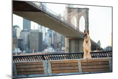 Dog Standing in Front of Brooklyn Bridge and NYC Skyline Horizontal-The Dog Photographer-Mounted Photographic Print