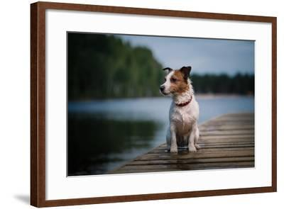 Jack Russell Terrier Dog Playing in Water, Summer, Beach- dezi-Framed Photographic Print