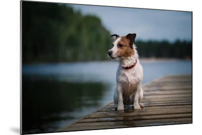 Jack Russell Terrier Dog Playing in Water, Summer, Beach- dezi-Mounted Photographic Print