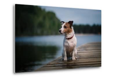Jack Russell Terrier Dog Playing in Water, Summer, Beach- dezi-Metal Print