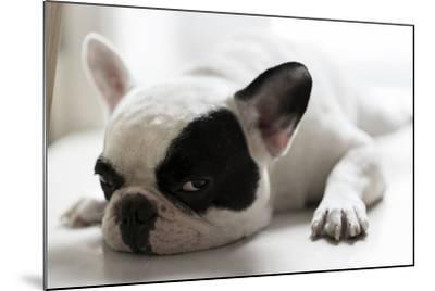 Sleepy French Bulldog- Kittibowornphatnon-Mounted Photographic Print