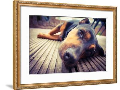 A Mixed Breed Dog Dozing on Wooden Deck-Jo millington-Framed Photographic Print