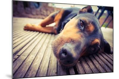 A Mixed Breed Dog Dozing on Wooden Deck-Jo millington-Mounted Photographic Print