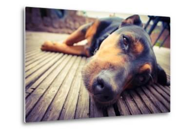 A Mixed Breed Dog Dozing on Wooden Deck-Jo millington-Metal Print