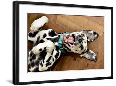 Dalmatian Dog Smiling- patostudio-Framed Photographic Print