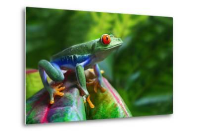 A Colorful Red-Eyed Tree Frog in its Tropical Setting.-Brandon Alms-Metal Print
