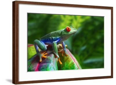 A Colorful Red-Eyed Tree Frog in its Tropical Setting.-Brandon Alms-Framed Photographic Print