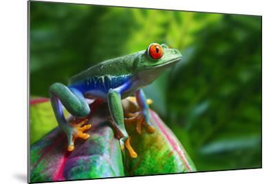 A Colorful Red-Eyed Tree Frog in its Tropical Setting.-Brandon Alms-Mounted Photographic Print