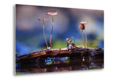 Small Mushrooms Toadstools Macro Poisonous-Kichigin-Metal Print