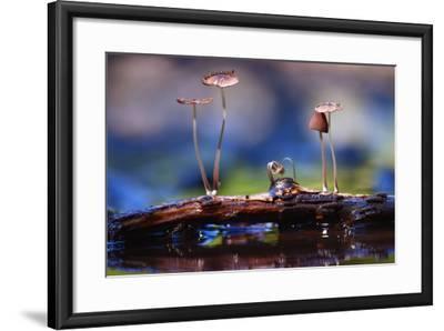 Small Mushrooms Toadstools Macro Poisonous-Kichigin-Framed Photographic Print