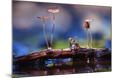 Small Mushrooms Toadstools Macro Poisonous-Kichigin-Mounted Photographic Print