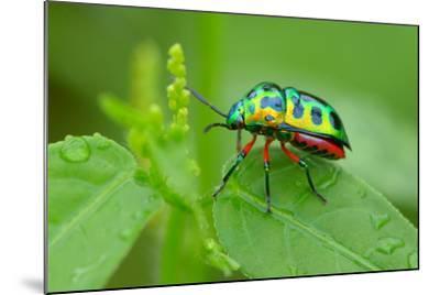 Colorful Shield Bug-YapAhock-Mounted Photographic Print