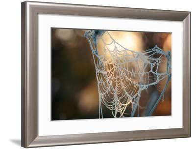 Frozen October Morning Cobwebs.- Stone36-Framed Photographic Print