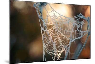 Frozen October Morning Cobwebs.- Stone36-Mounted Photographic Print