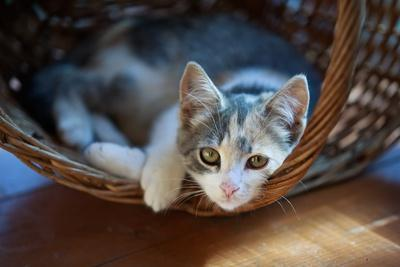 Cat Pretty-Alexey U-Framed Photographic Print