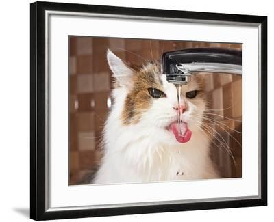 Cat Drinking Water in Bathroom-phant-Framed Photographic Print