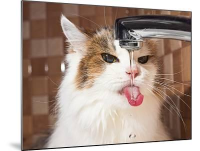 Cat Drinking Water in Bathroom-phant-Mounted Photographic Print