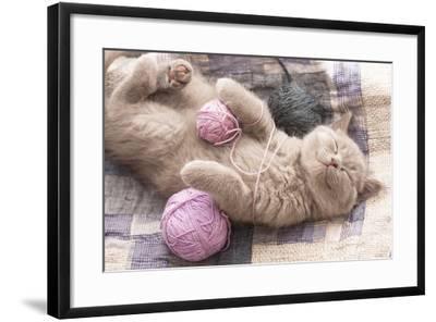 Sleeping Kitten Rare Color (Lilac)-Liliya Kulianionak-Framed Photographic Print