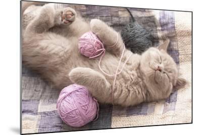 Sleeping Kitten Rare Color (Lilac)-Liliya Kulianionak-Mounted Photographic Print