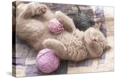 Sleeping Kitten Rare Color (Lilac)-Liliya Kulianionak-Stretched Canvas Print
