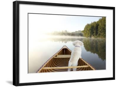 Small White Cockapoo Dog Navigating from the Bow of a Canoe on a Misty Lake - Ontario, Canada-Brian Lasenby-Framed Photographic Print